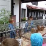 SoFe2014 - Zwergenhühner 02